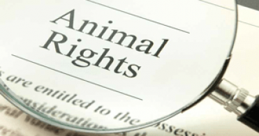 Animal Welfare Law UAE